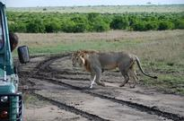 Kenia: Olare Safari Camp