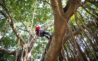 Wspinaczka drzewna